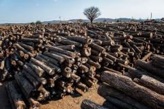 4638949_6_0bcc_stockage-de-troncs-d-arbres-au-mozambique_a157b30931aa27a695deecc598dff54f.jpg